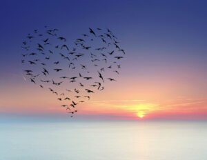 Birds flying in a heart-shaped formation